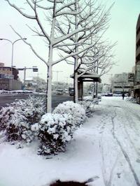 Yukitumo